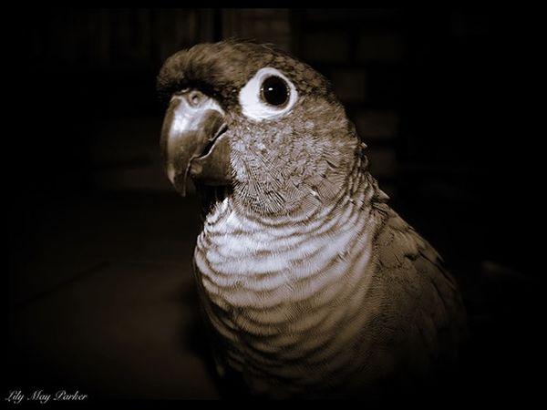 Lily May Parker Bird Photography Peroquet Beautiful Beaytiful Kito Lily May Parker