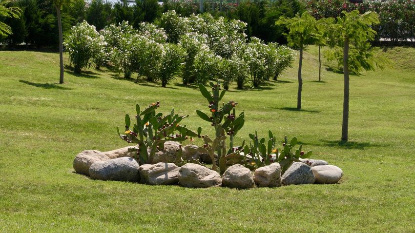 Rock Land Solid Field Park - Man Made Space Tranquility Sunlight Relaxation Outdoors Park Lawn Beauty In Nature Growth No People Green Color Day Nature Tree Grass Plant Garden