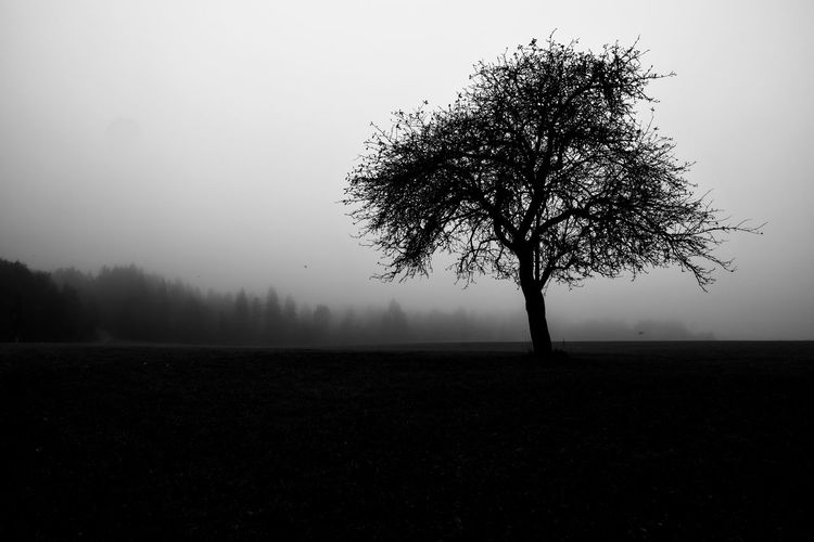 Silhouette tree on field against sky