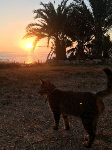 Cyprus Cyprus Cat Palm Tree Animal Themes Beauty In Nature Cat Domestic Animals Nature No People One Animal Sea Sea And Sky Sunset Been There.