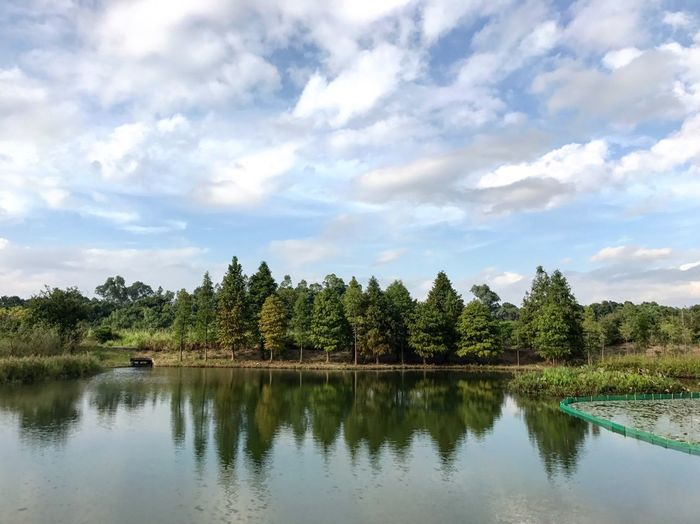 Tree Nature Water Sky Scenics Tranquility Cloud - Sky Growth Tranquil Scene Landscape Reflection Beauty In Nature No People Outdoors Travel Destinations Lake