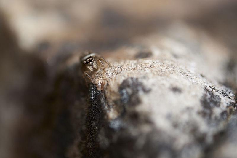 A closeup of a