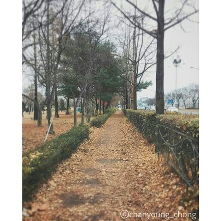 낙엽 떨어진 겨울길. 점점 추워지고 있다. First Eyeem Photo