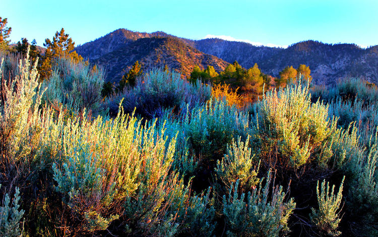 Beauty In Nature Desert Landscape Mountain Nature Pearblossom, CaSpringtime Devil's Punchbowl Tranquil Scene The Great Outdoors - 2016 EyeEm Awards