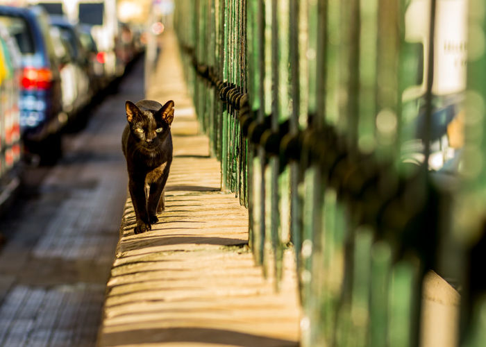 Portrait of cat by fence