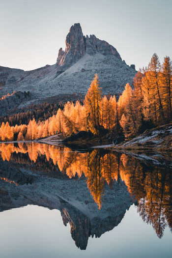Reflection of tree in lake against clear sky during autumn