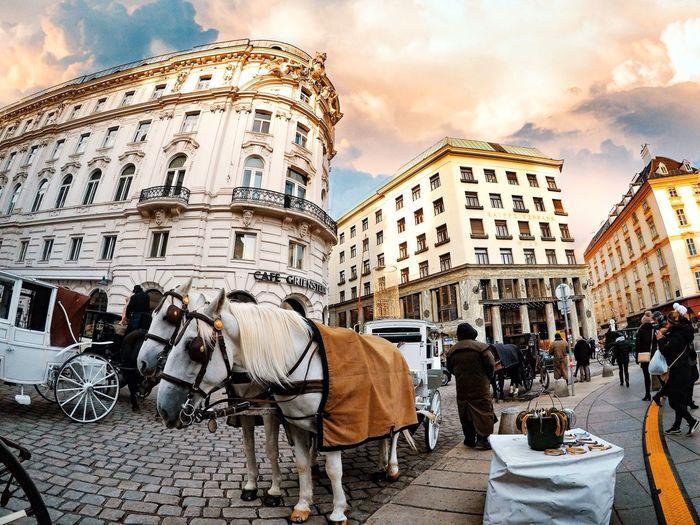 Vienna style