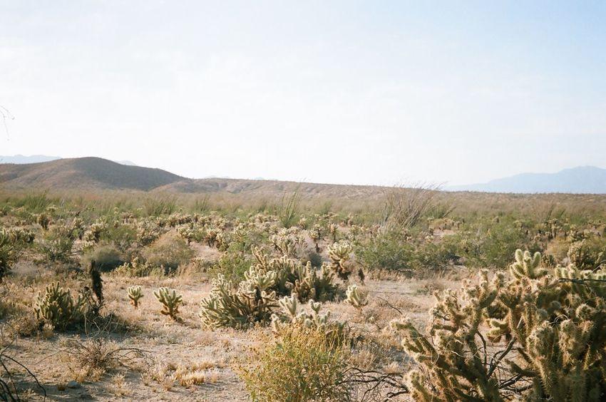 Landscape Desert Day Nature Outdoors Film 35mm Film Filmisnotdead Cactus Desert Beauty No Edit/no Filter