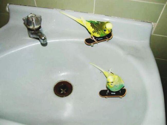 Skate Boarding  Skate♥ Go Skate