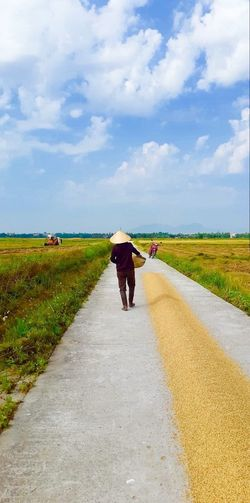 Vietnam Hoi An, Vietnam Hoi An Rice Field Rice Paddy Rice Drying Rice Conical Hat