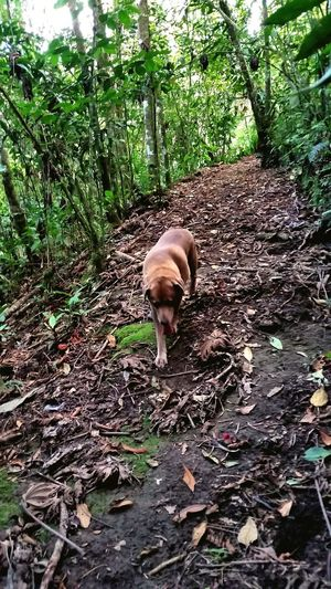 Dog Rainforest Walk Pet Nature Plant Capturing The Moment Trees Leaves Linda Vista, Coto Brus, Costa Rica
