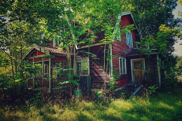 Abandoned house amidst trees and plants in forest