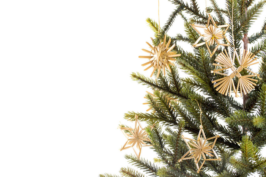 Close-up Copy Space Day Growth Low Angle View Nature No People Outdoors Sky Strawstars Tree White Background Christmas Decoration Christmas Vintage Christmas Christmastree