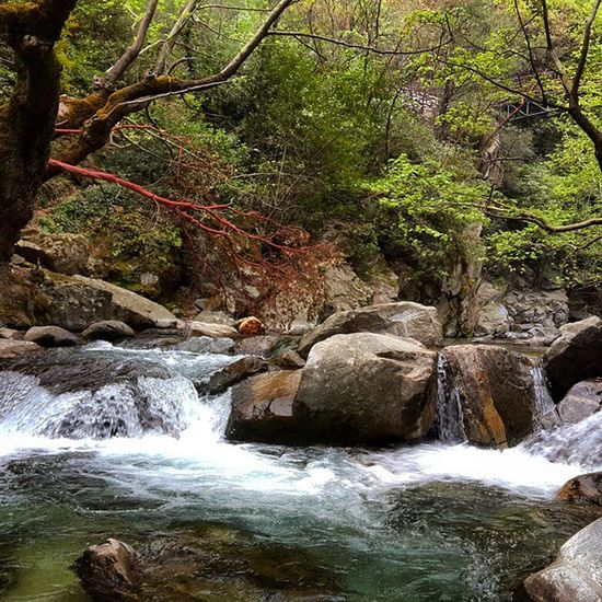 Kazdağları Millipark Hasanboğulduşelalesi Su Orman Susesi Suakaryolunubulur