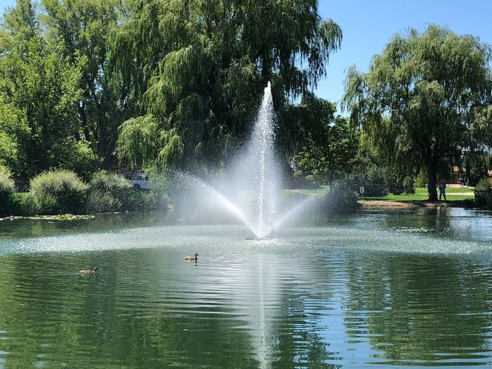 Water Tree Plant Spraying Fountain Nature Motion Lake Growth Splashing Scenics - Nature Beauty In Nature Waterfront Park - Man Made Space Outdoors Park Flowing Water Green Color No People Day