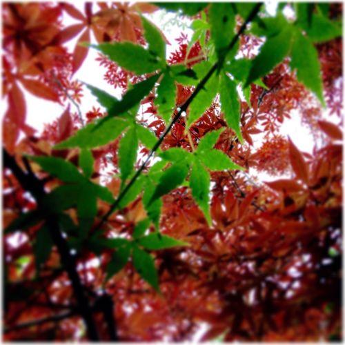 Japon Japon Nature Colors Couleur feuilles Gilgiuglio AgilPhoto nagazaki