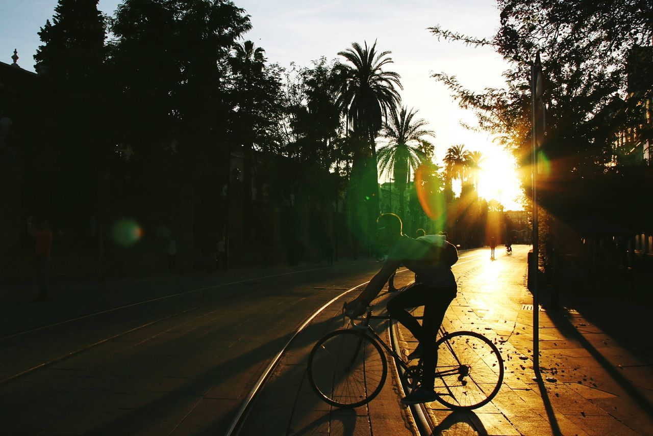 bicycle, tree, transportation, mode of transport, land vehicle, cycling, palm tree, outdoors, road, no people, sunlight, sunset, city, sky, day, nature