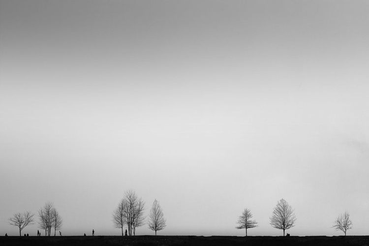 Human - Trees Minimalist Lessismore Digital Composite Minimalism Blackandwhite Black And White Black & White My Best Photo Tree Snow Cold Temperature Winter Sky Landscape Foggy Bare Tree Weather Dead Plant Dead Tree Fog