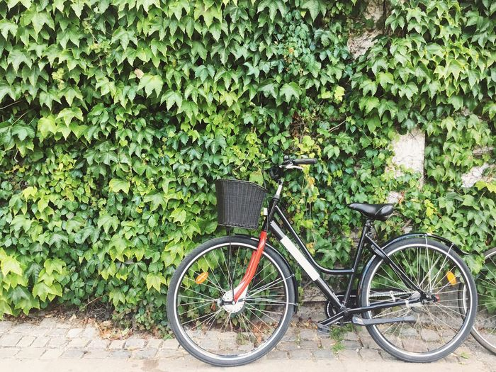 Bicycle parked by tree