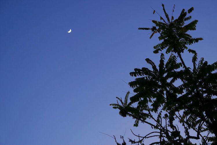 Night sky - 365 of 365 Night Photography Nightscape Samsung Nx3000 Moon Taking Photos Pastel Power