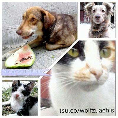 In My Yard Dogs Cats Animals Pufosenii Pufosi @wolfzuachis Colaj Cute Pets