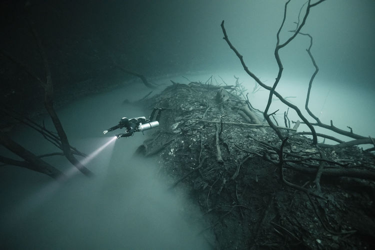 Nature Tree Plant Day Water No People Outdoors Fog Underwater Tranquility Branch Beauty In Nature Forest Tranquil Scene UnderSea Scenics - Nature Low Angle View Sea Pollution