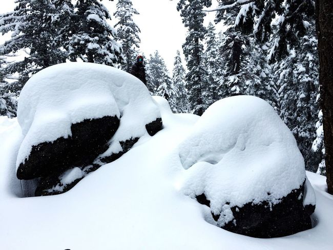 Snowy Boulders Snow Northstar Snowboarding Fresh Pow! Fresh Powder Powder Day Snowy Trees Trees Covered With Snow Truckee  Truckee, Ca Truckee Lake Tahoe California Ski Resort  IPhoneography Iphonephotography Boulders Landscapes With WhiteWall Check This Out