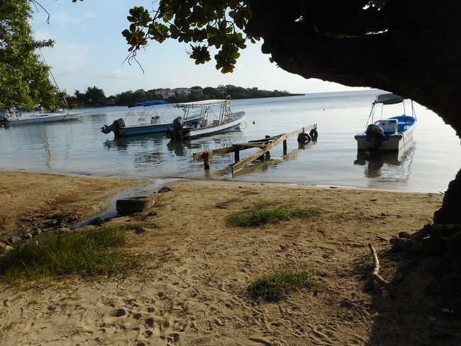 Crab Honduras Roatan Bay Islands Beach Beauty In Nature Cloud - Sky Day Men Mode Of Transport Moored Mountain Nature Nautical Vessel Outdoors Real People River Riverbank Sand Scenics Sky Tranquility Transportation Tree Water