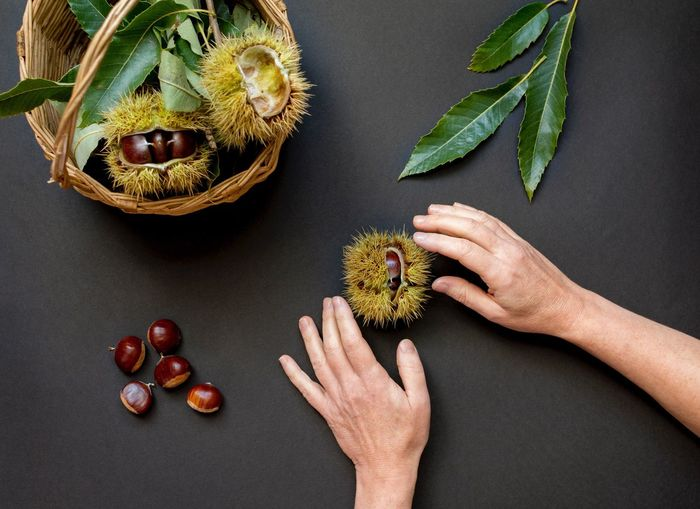 Close-up of woman hand holding chestnut