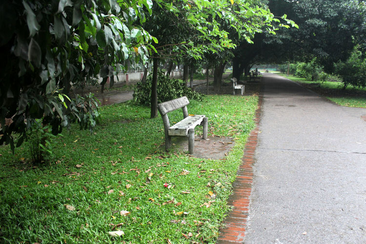 Plant Tree Seat Bench Nature Park Growth Green Color Grass Day Tranquility Park - Man Made Space No People Empty Park Bench Outdoors Footpath Beauty In Nature Absence Direction Garden Path