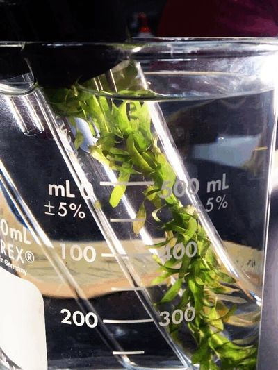 Close-up Tube Plant Science Class Science Chlorophyll