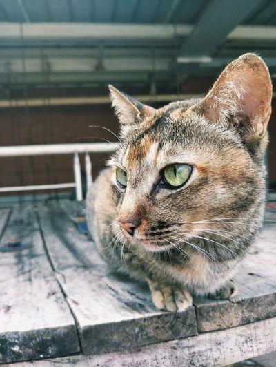 Portrait Feline