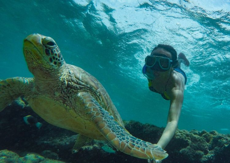 Woman with tortoise swimming in sea