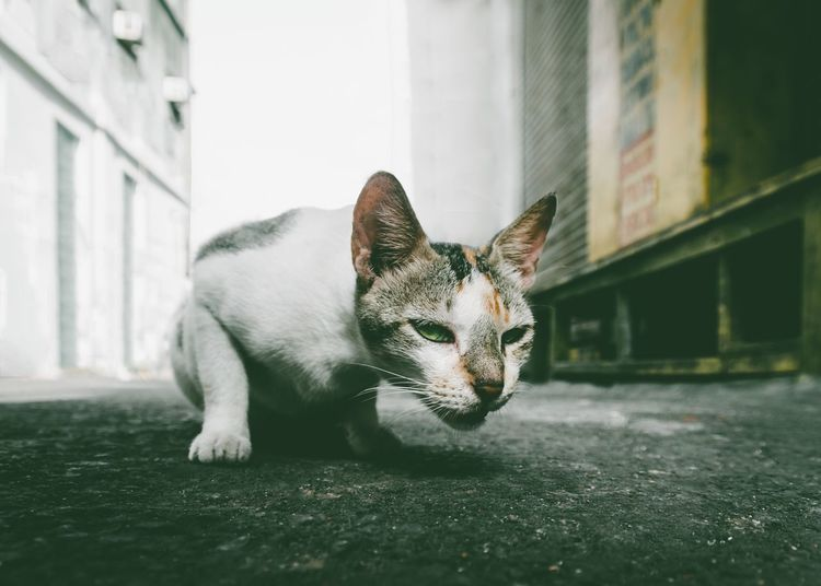 EyeEm Selects Cat Street Streetphotography Mumbai India Animals Cityanimals City Alley Alley Cat Green Citylife Bombay Pets Animal Themes Domestic Cat Domestic Animals One Animal Mammal Feline No People Day Whisker Built Structure Architecture Relaxation Outdoors Sitting Building Exterior Close-up