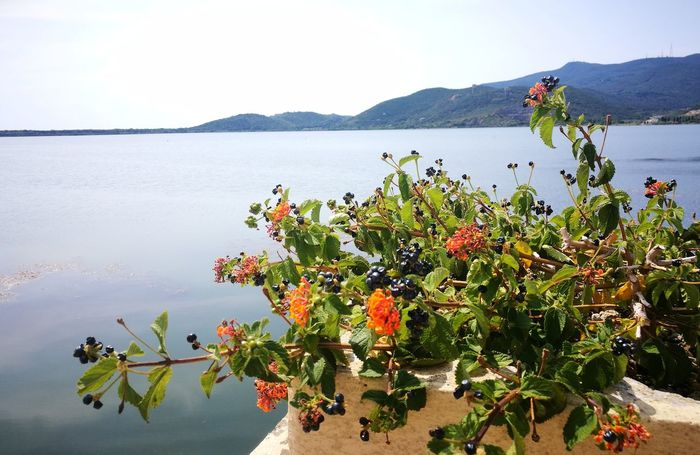 la laguna di Orbetello Beautiful Colors Quadronatural Beauty In Nature Point Of View Elementi Naturali Flower Water Lake Sky Plant In Bloom