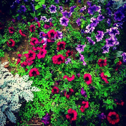 __________________________________ Flowers Color Green Podolsk Russia цветы цвет зеленый Подольск Россия __________________________________