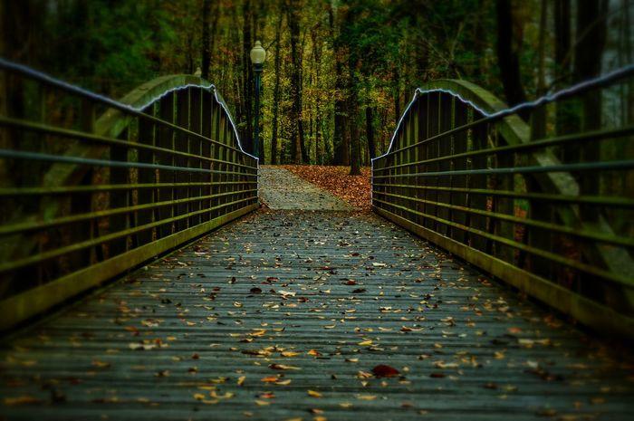 Come. Nikon D3200 Forest Bridge Light Trees Wooden Bridge