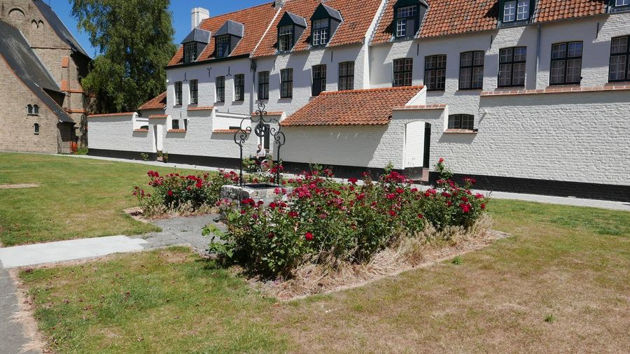 Architecture House Building Exterior Flower Built Structure Residential Building Outdoors Town No People Day City Nature Architecture Photography Cityscape Beguinage Architectural White Color Houses Building Architecture_collection Summer Outdoor Blue Sky