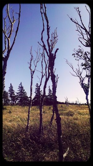 Walking Nature On A Hike Landscapes