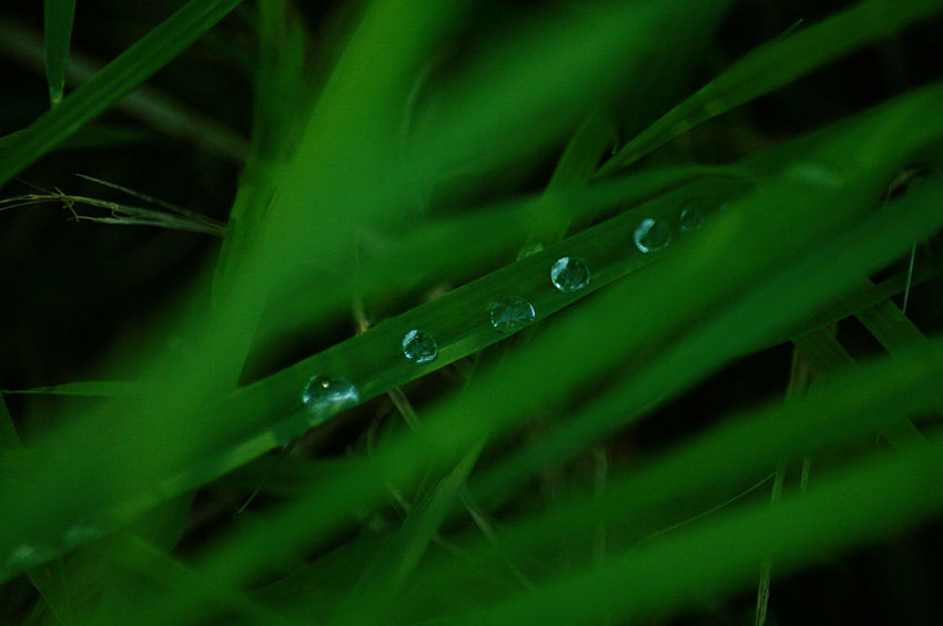 hidden treasures - 2 Beauty In Nature Blade Of Grass Close-up Day Dew Drop Focus On Foreground Freshness Grass Green Green Color Growth Nature No People Outdoors Plant Selective Focus