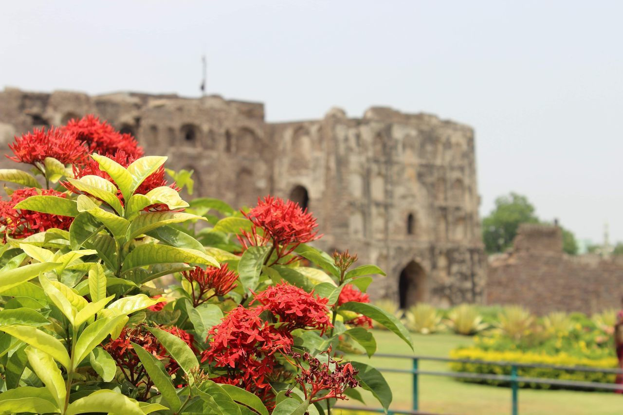 plant, architecture, flower, flowering plant, built structure, building exterior, nature, history, the past, day, growth, sky, travel destinations, building, focus on foreground, no people, outdoors, freshness, travel, tourism