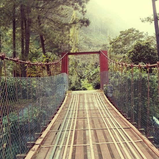 Red Bridge In The Forest I Find It Cool Taking Photos Photo Of The Day Check This Out