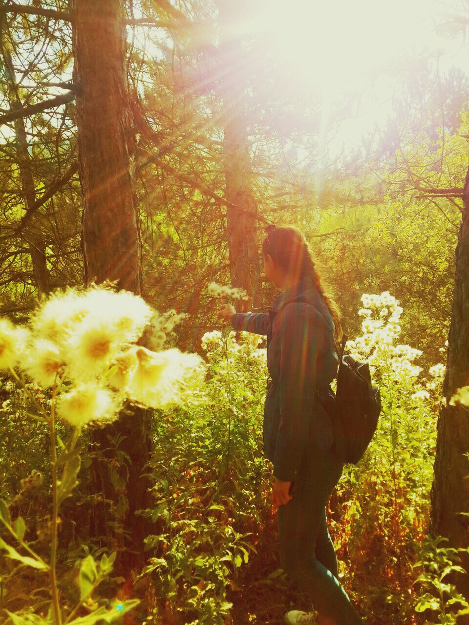 tree, flower, sunlight, sunbeam, growth, lens flare, lifestyles, leisure activity, casual clothing, plant, rear view, three quarter length, person, freshness, park - man made space, beauty in nature, bright, fragility, sun, nature, day, sunny, green color, park, footpath