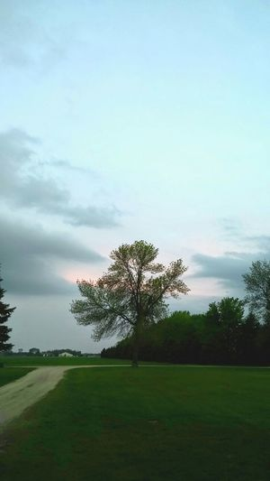 Tree Beauty In Nature Meadow Grass Cloud - Sky No People Landscape Tranquility Outdoors Nature Day Rural Scene Sky Golf Course
