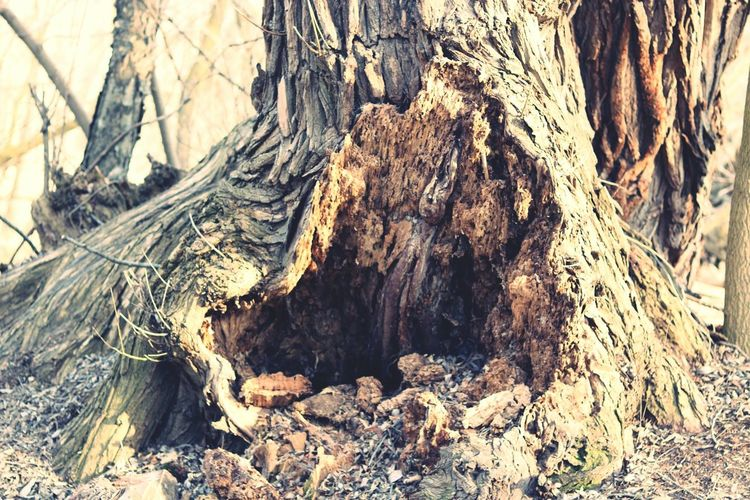 Tree Trunk Tree Nature No People Textured  Full Frame Day Outdoors Beauty In Nature Close-up Forest Photography Forest Landscape Environment Trail Canonphotography Canon
