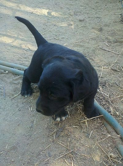 Image Imagination Adorable Adorable Puppy Awesome Puppy Black Canine Dog Photo Photography Puppy White