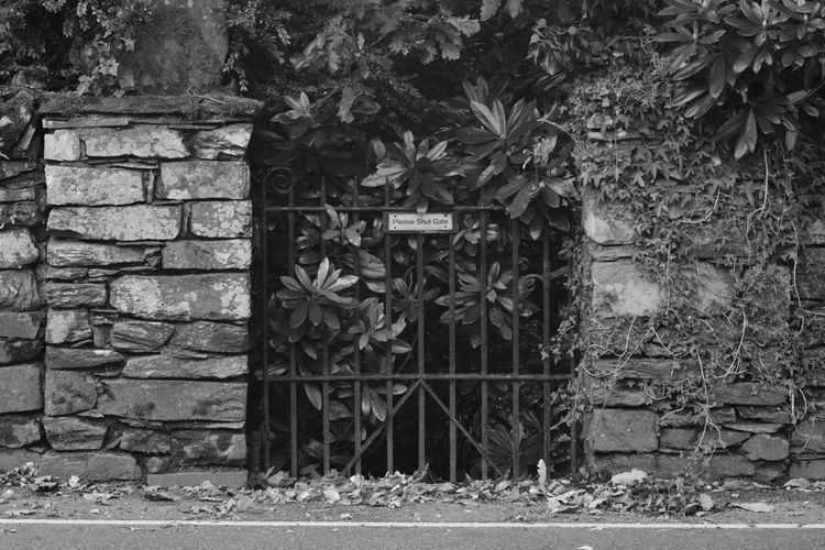 Blackandwhite Day Gate Grassmere Growth Leaf No Edit No Filter Photography No People Obsolete Outdoors Wall - Building Feature