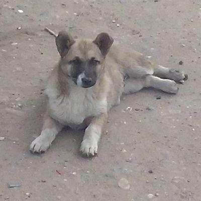 В ожидании чуда тимон собаки Тимоша щенок милота instadog dog