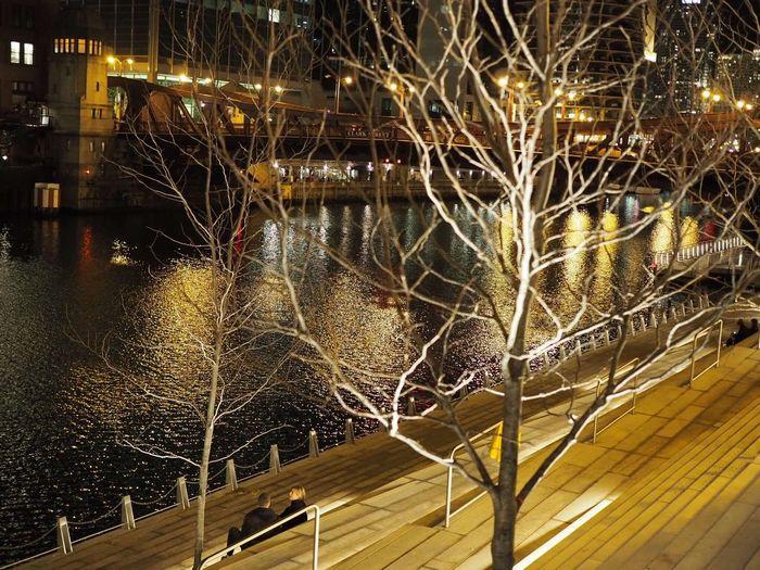 Illuminated bare tree during winter at night