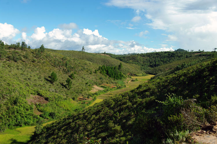 Green Mada Beauty In Nature Blue Sky Day Growth Landscape Madagascar  Madagascar Nature Mountain Nature No People Outdoors Scenics Sky Tranquil Scene Tree Vegetation